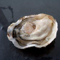 Ierse holle oester n°3 per stuk