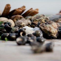 Schaal-en schelpdieren