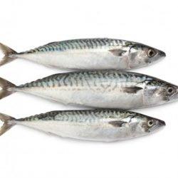 Makreel (400g gefileerd)