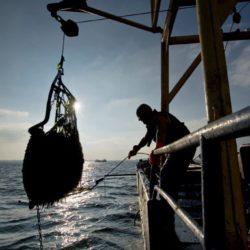 """Zeeuwse mossel bodemcultuur """"Jumbo"""" per 500g"""